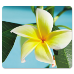 Recycled Mouse Pad Nonskid Base 7 1/2 X 9 Yellow Flowers